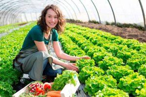 Agroseguro de Invernaderos
